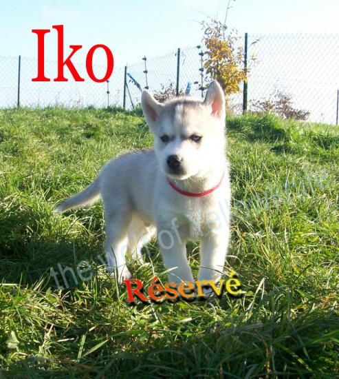 Iko (3)
