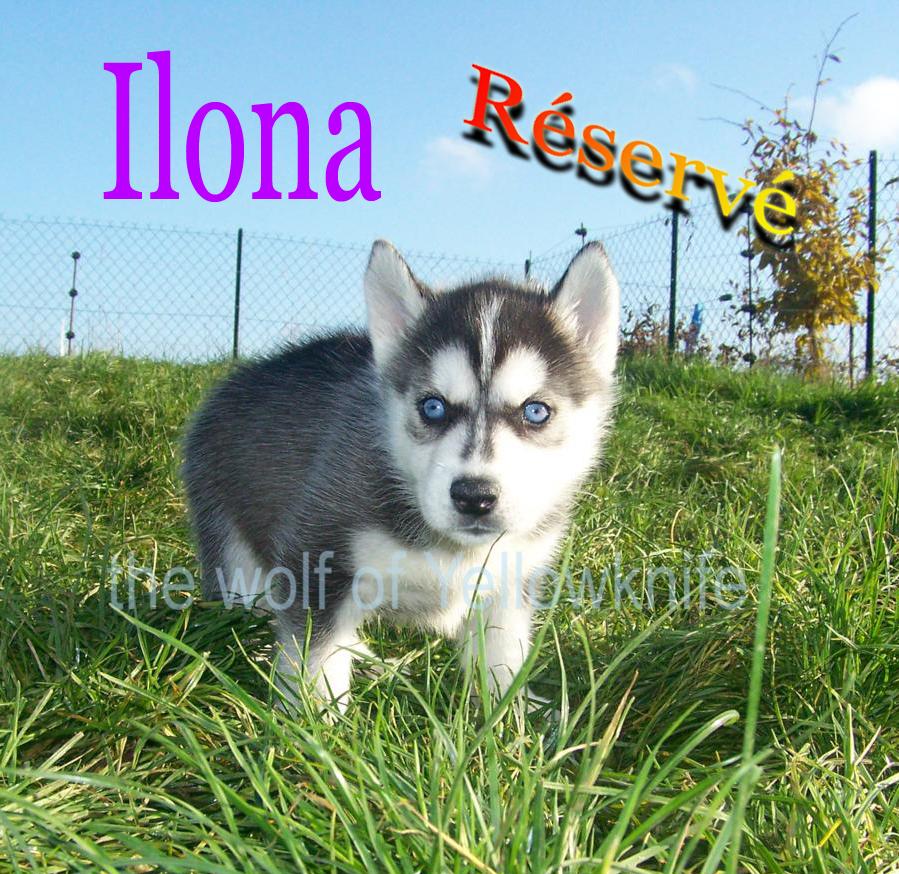 Ilona (2)