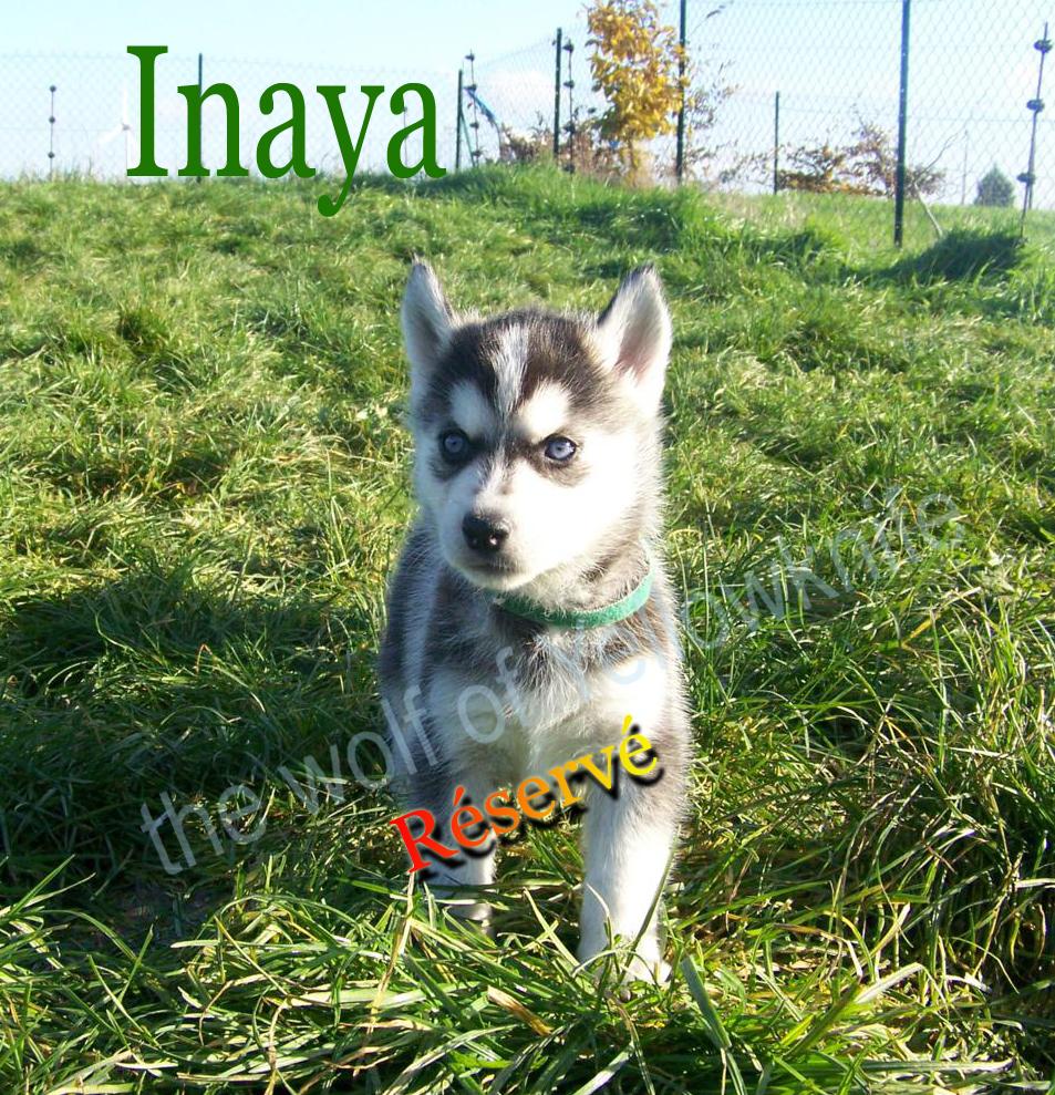 Inaya (3)