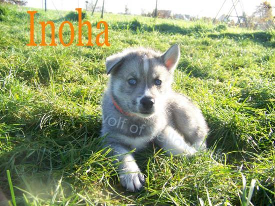 Inoha