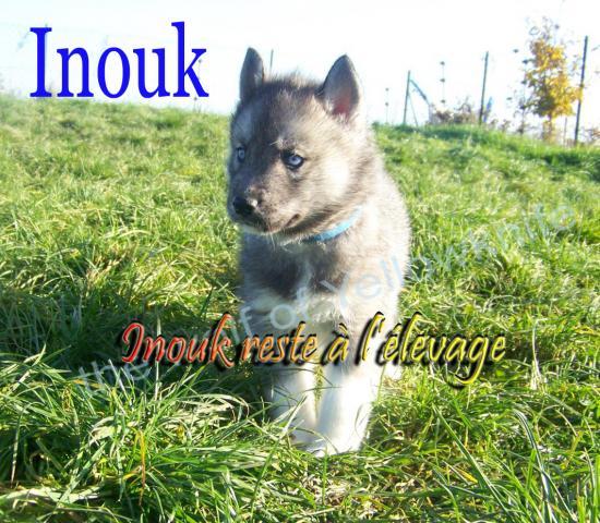 Inouk (2)