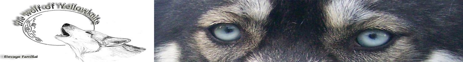 Eleveur De Husky Sibérien