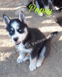 Pepsy 01